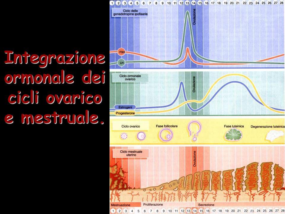 Integrazione ormonale dei cicli ovarico e mestruale.