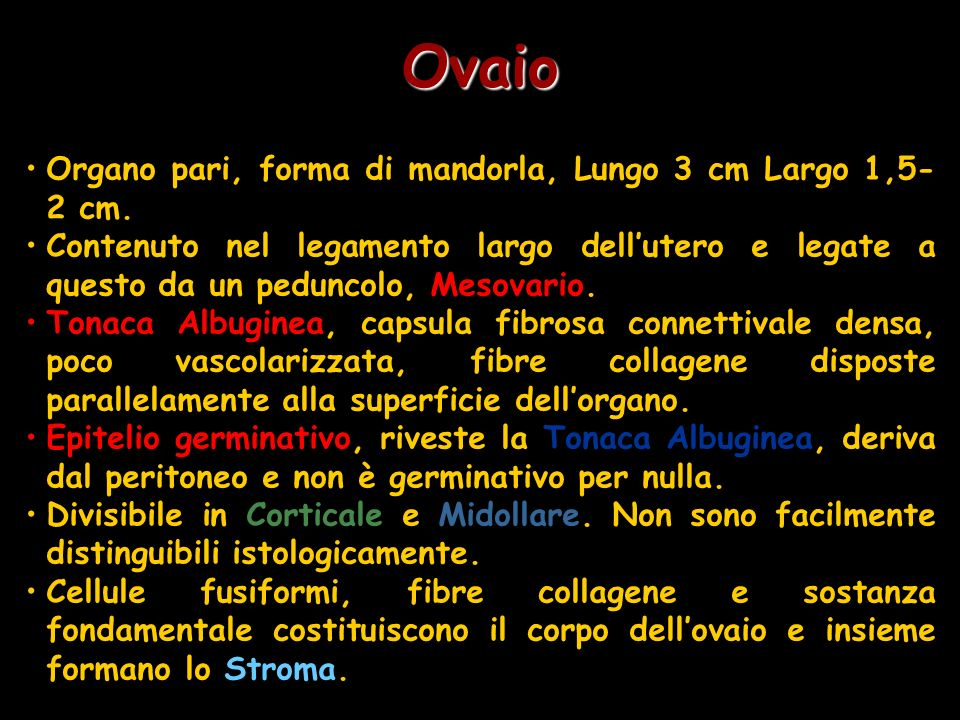 Ovaio Organo pari, forma di mandorla, Lungo 3 cm Largo 1,5-2 cm.