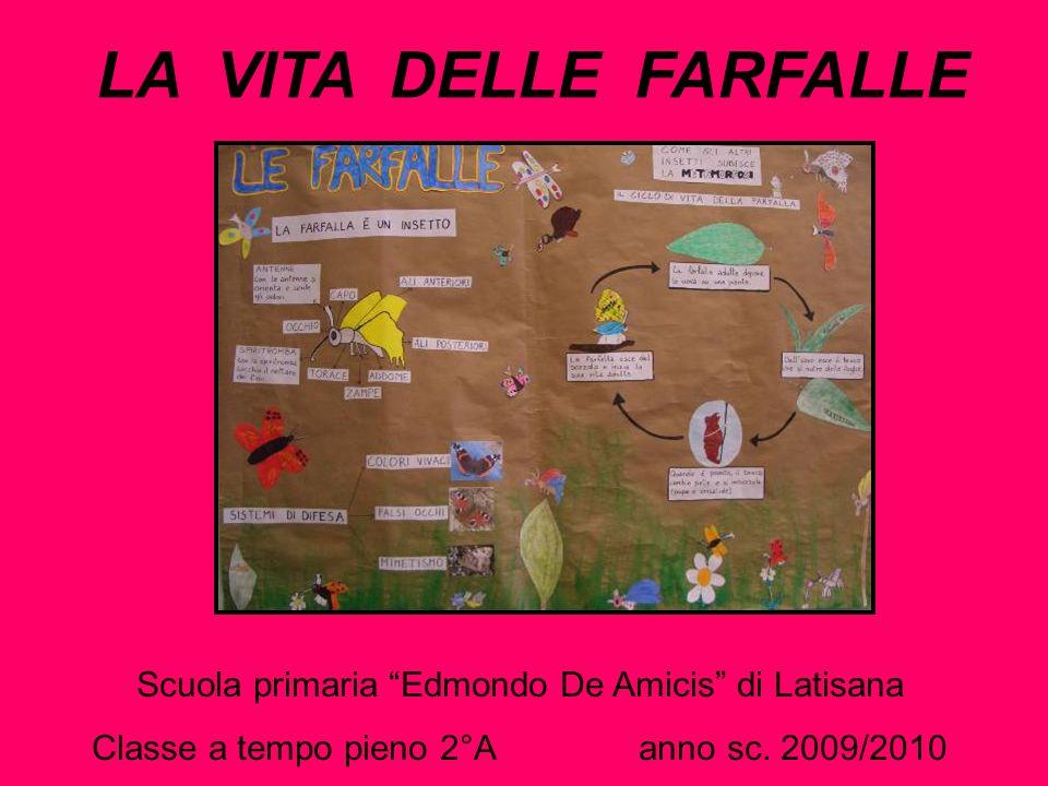 LA VITA DELLE FARFALLE Scuola primaria Edmondo De Amicis di Latisana