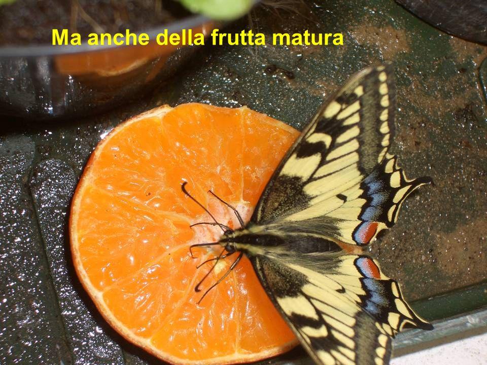 Ma anche della frutta matura