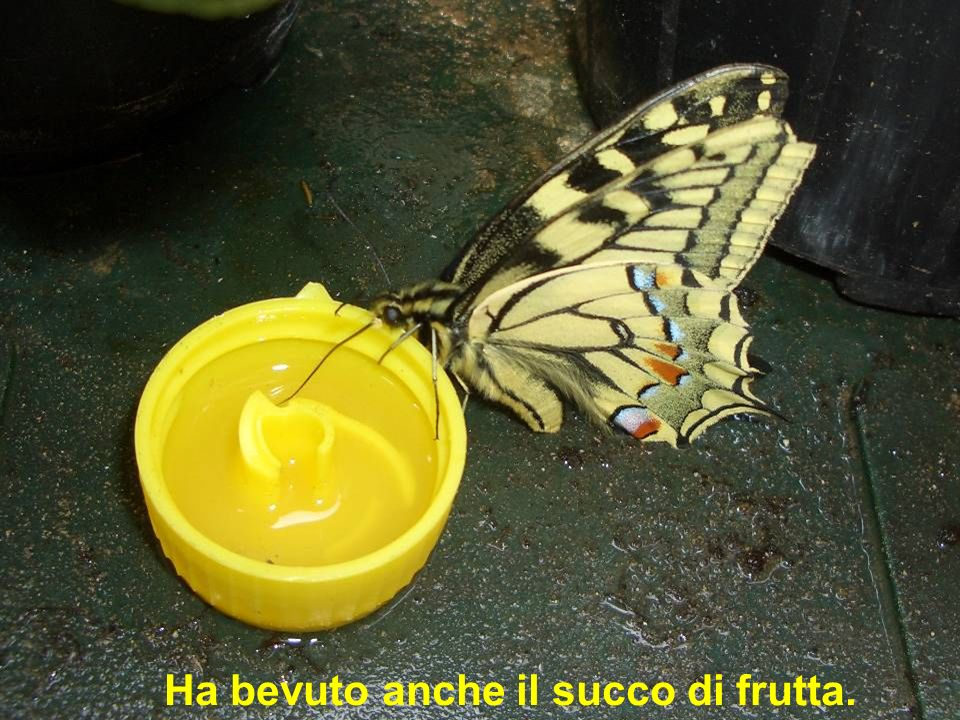 Ha bevuto anche il succo di frutta.