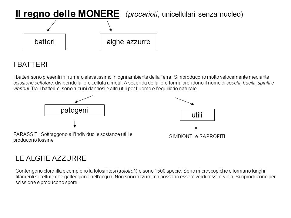 Il regno delle MONERE (procarioti, unicellulari senza nucleo) batteri