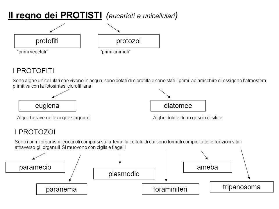 Il regno dei PROTISTI (eucarioti e unicellulari)