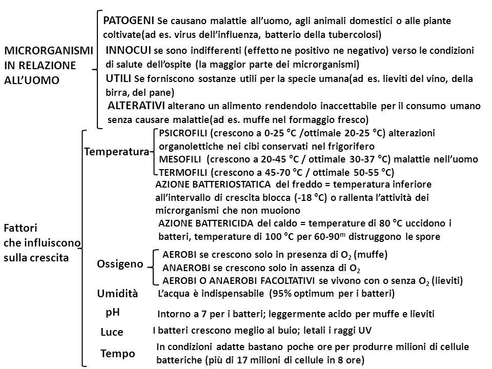 MICRORGANISMI IN RELAZIONE ALL'UOMO
