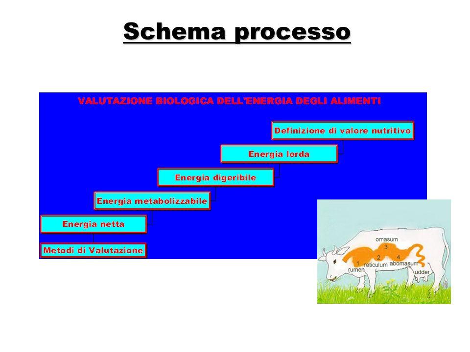 Schema processo Mappa concettuale