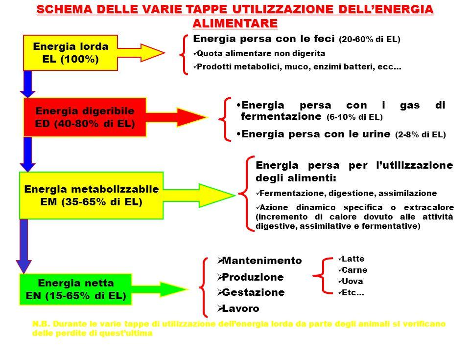 SCHEMA DELLE VARIE TAPPE UTILIZZAZIONE DELL'ENERGIA ALIMENTARE