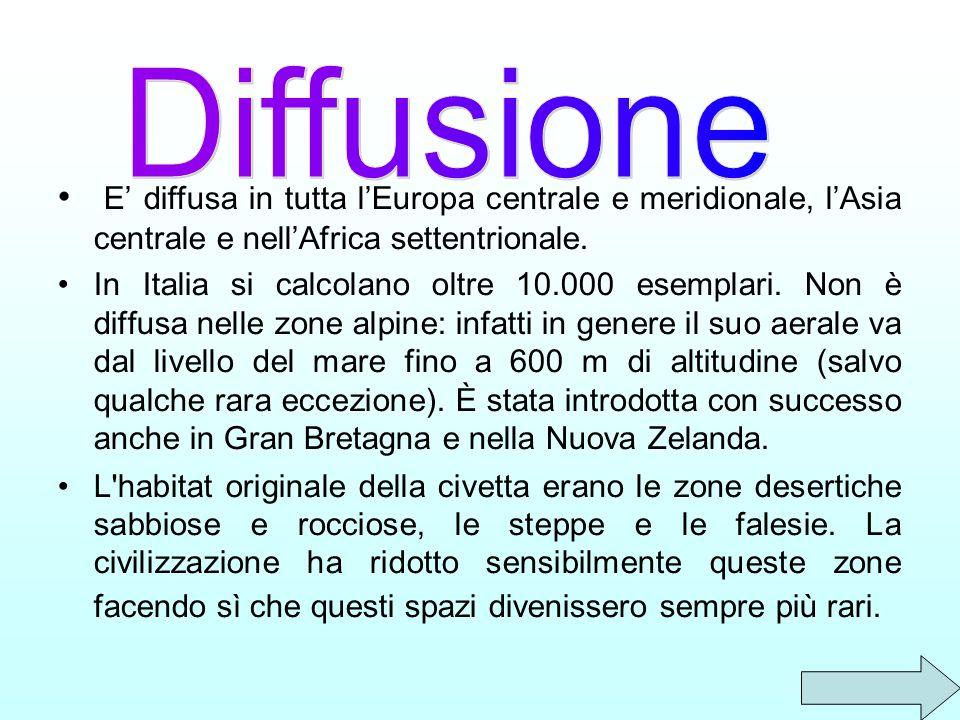 Diffusione E' diffusa in tutta l'Europa centrale e meridionale, l'Asia centrale e nell'Africa settentrionale.