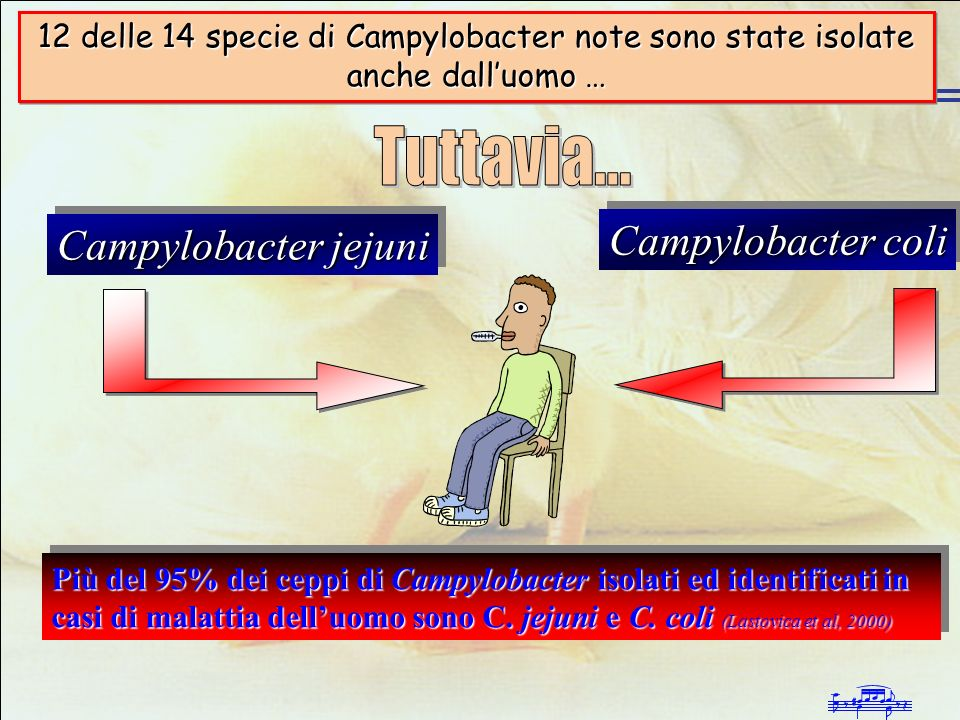 Tuttavia... Campylobacter coli Campylobacter jejuni