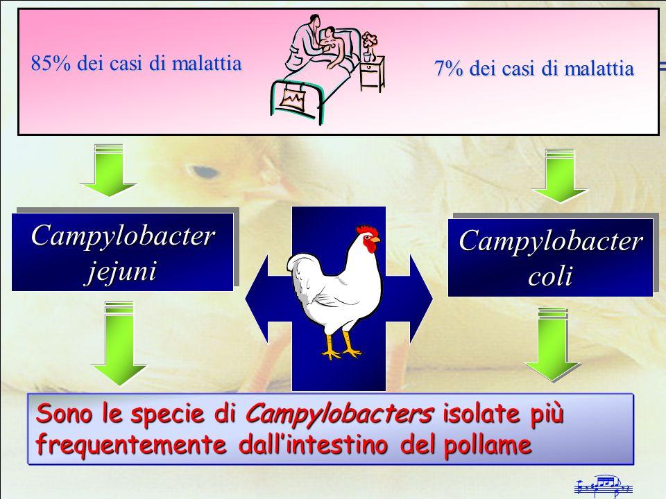 Campylobacter jejuni Campylobacter coli