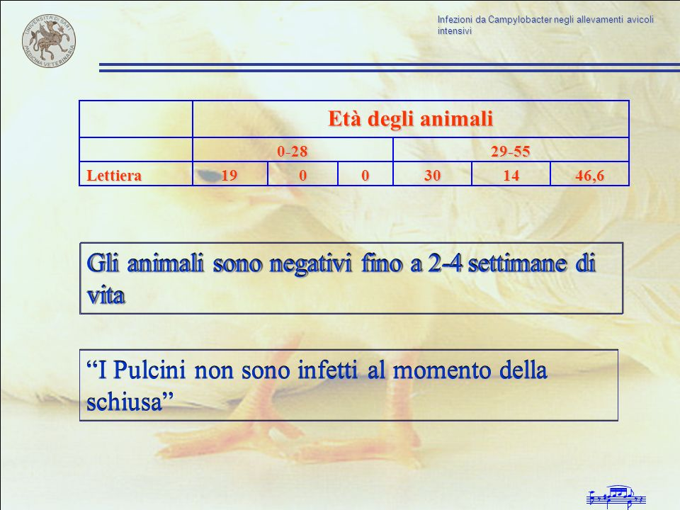 Gli animali sono negativi fino a 2-4 settimane di vita