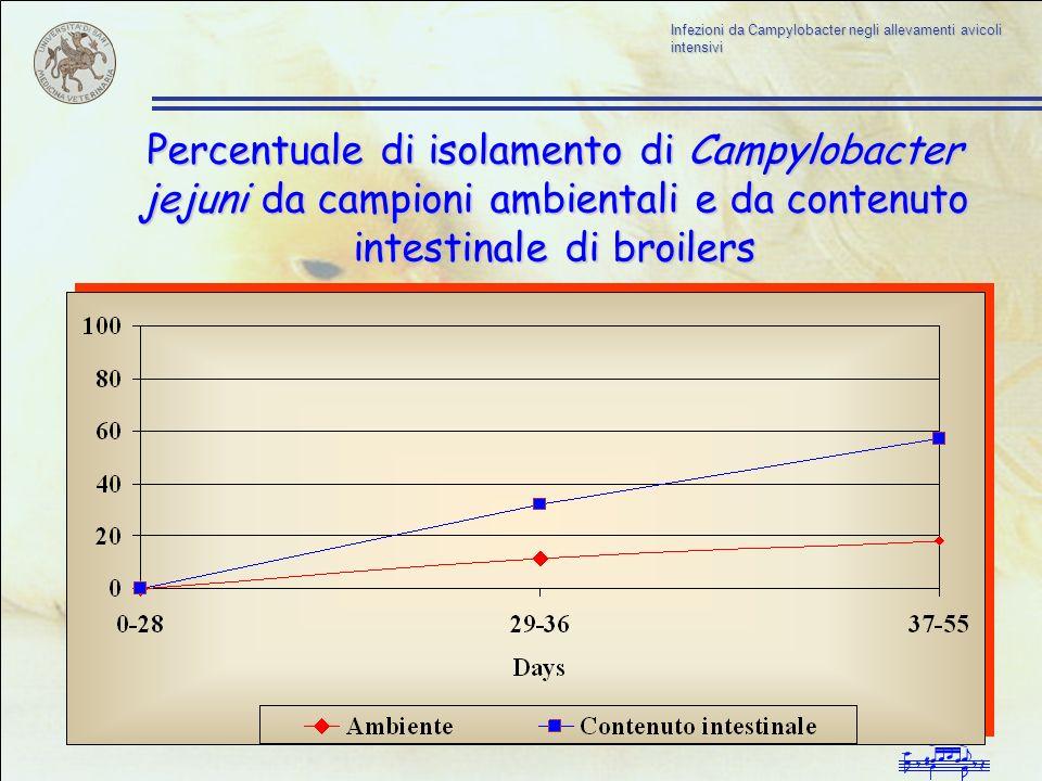 Percentuale di isolamento di Campylobacter jejuni da campioni ambientali e da contenuto intestinale di broilers