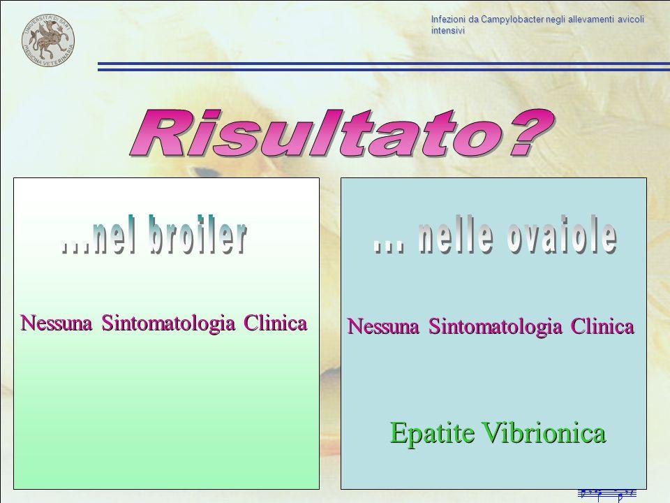 Risultato ...nel broiler ... nelle ovaiole Epatite Vibrionica