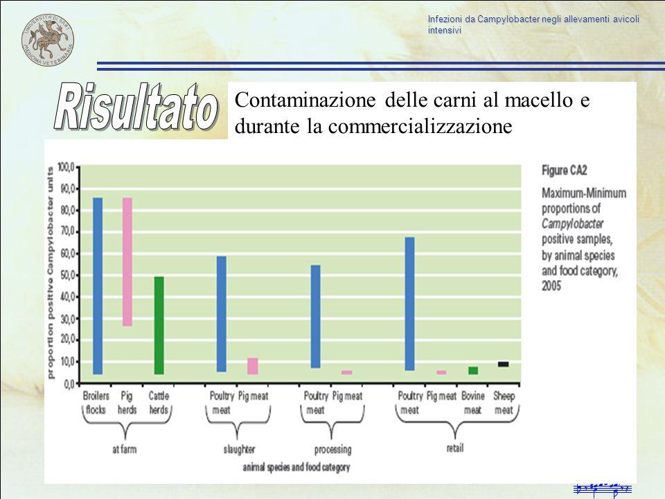 Risultato Contaminazione delle carni al macello e durante la commercializzazione