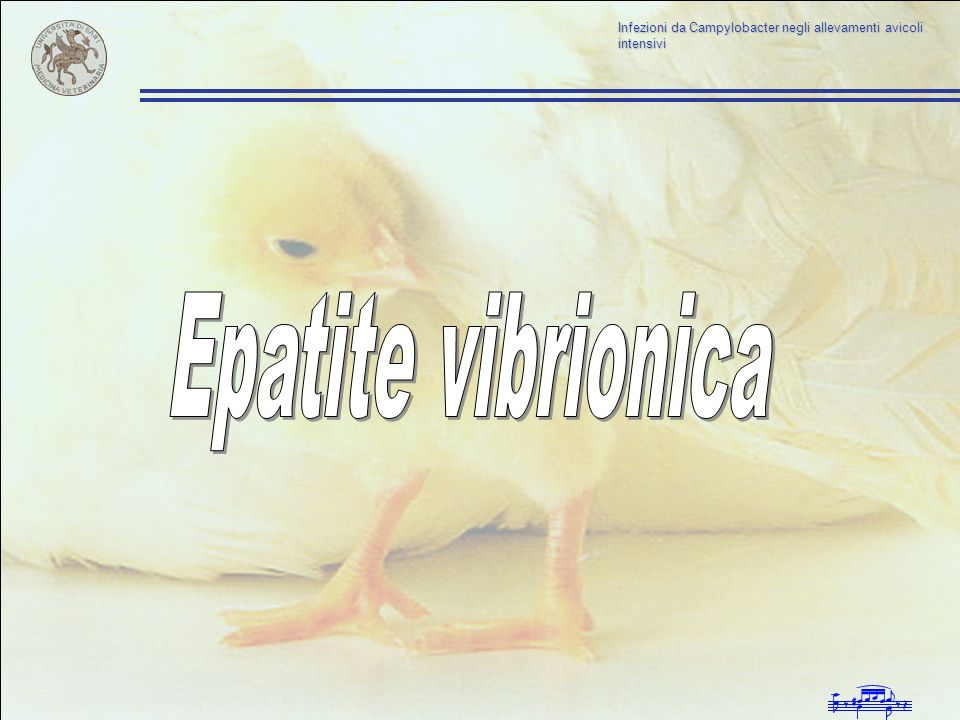 Epatite vibrionica
