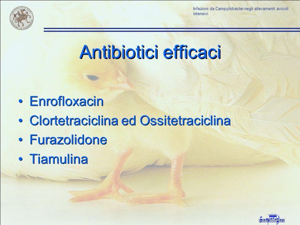 Antibiotici efficaci Enrofloxacin Clortetraciclina ed Ossitetraciclina