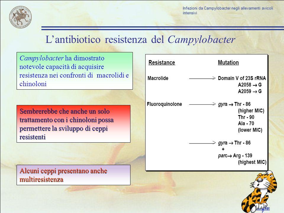 L'antibiotico resistenza del Campylobacter