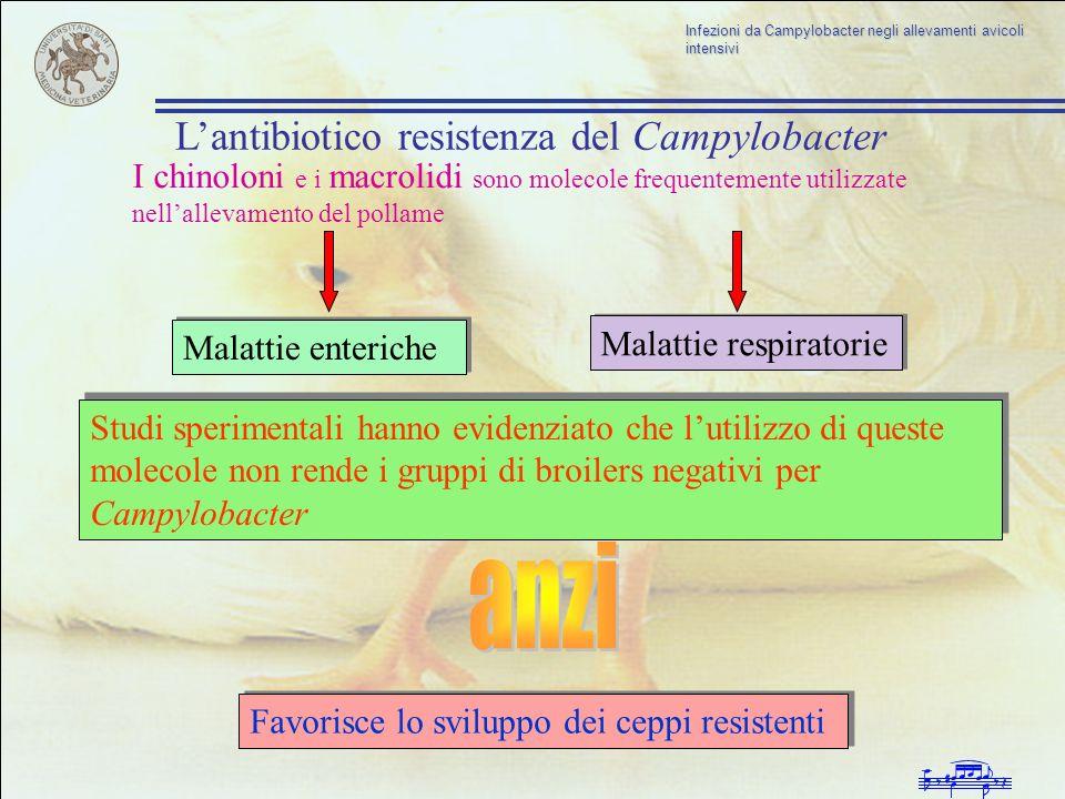 anzi L'antibiotico resistenza del Campylobacter