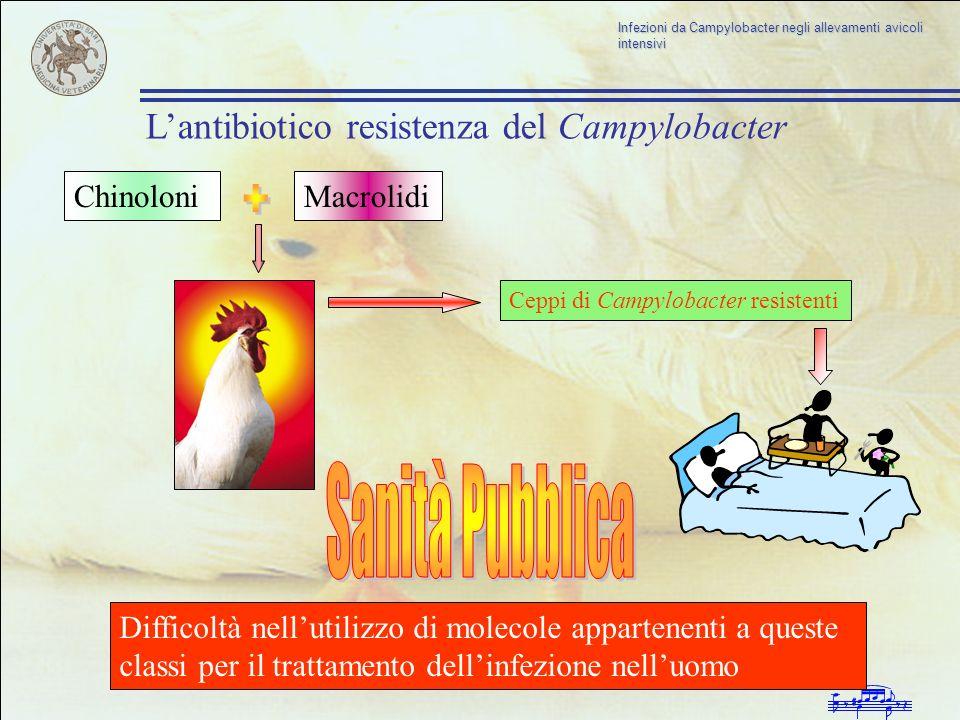+ Sanità Pubblica L'antibiotico resistenza del Campylobacter Chinoloni