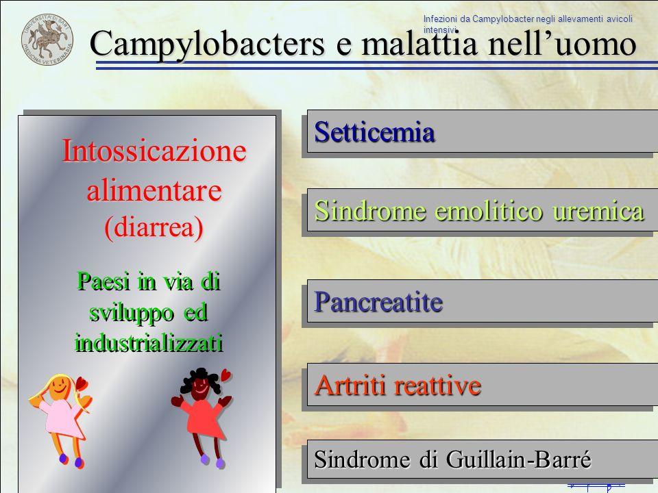 Campylobacters e malattia nell'uomo