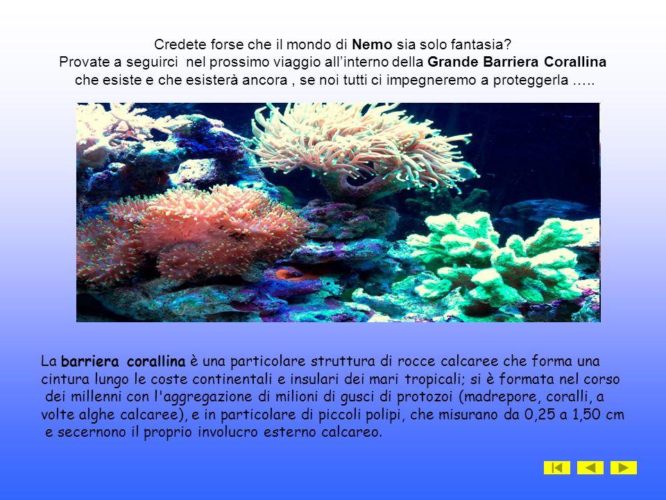 Credete forse che il mondo di Nemo sia solo fantasia