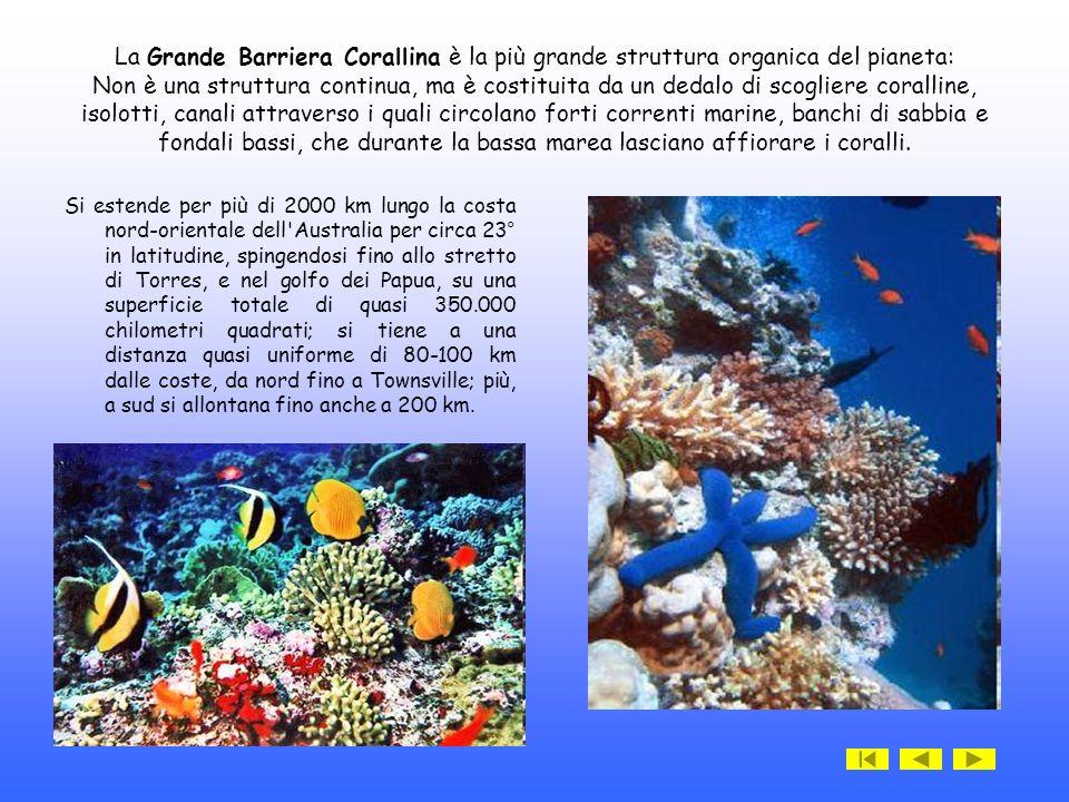 La Grande Barriera Corallina è la più grande struttura organica del pianeta: Non è una struttura continua, ma è costituita da un dedalo di scogliere coralline, isolotti, canali attraverso i quali circolano forti correnti marine, banchi di sabbia e fondali bassi, che durante la bassa marea lasciano affiorare i coralli.
