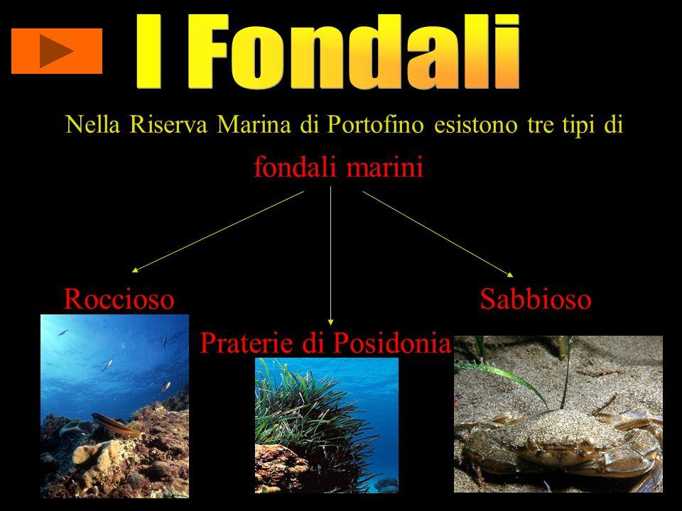 I Fondali fondali marini Roccioso Sabbioso Praterie di Posidonia