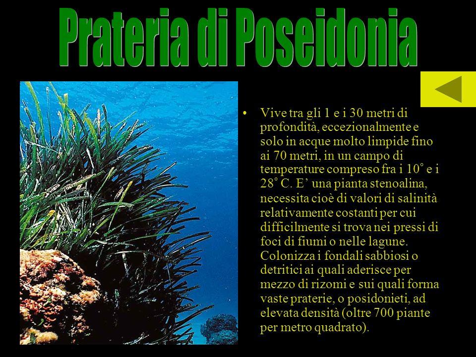 Prateria di Poseidonia