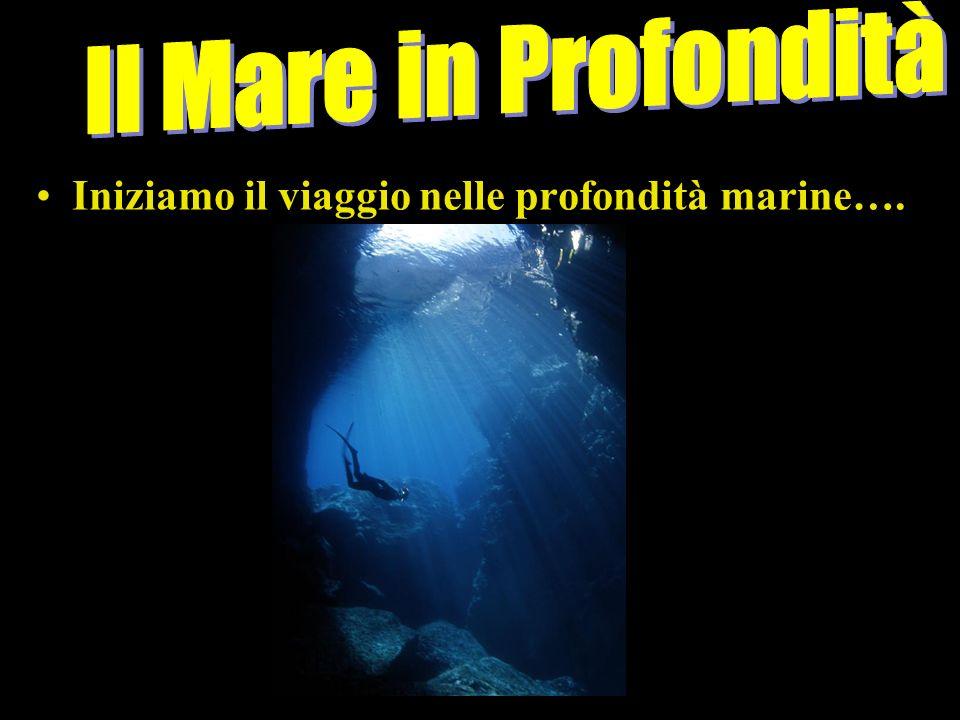 Il Mare in Profondità Iniziamo il viaggio nelle profondità marine…..