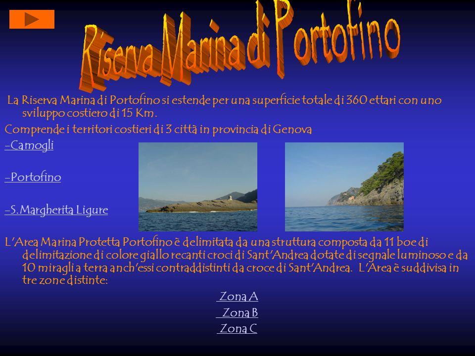 Riserva Marina di Portofino