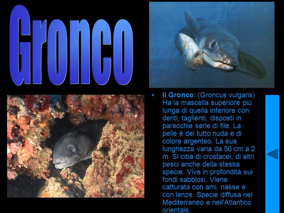 Gronco