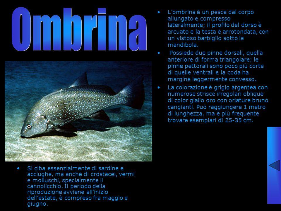Ombrina