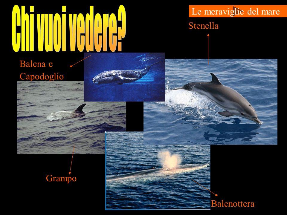 Chi vuoi vedere Le meraviglie del mare Stenella Balena e Capodoglio