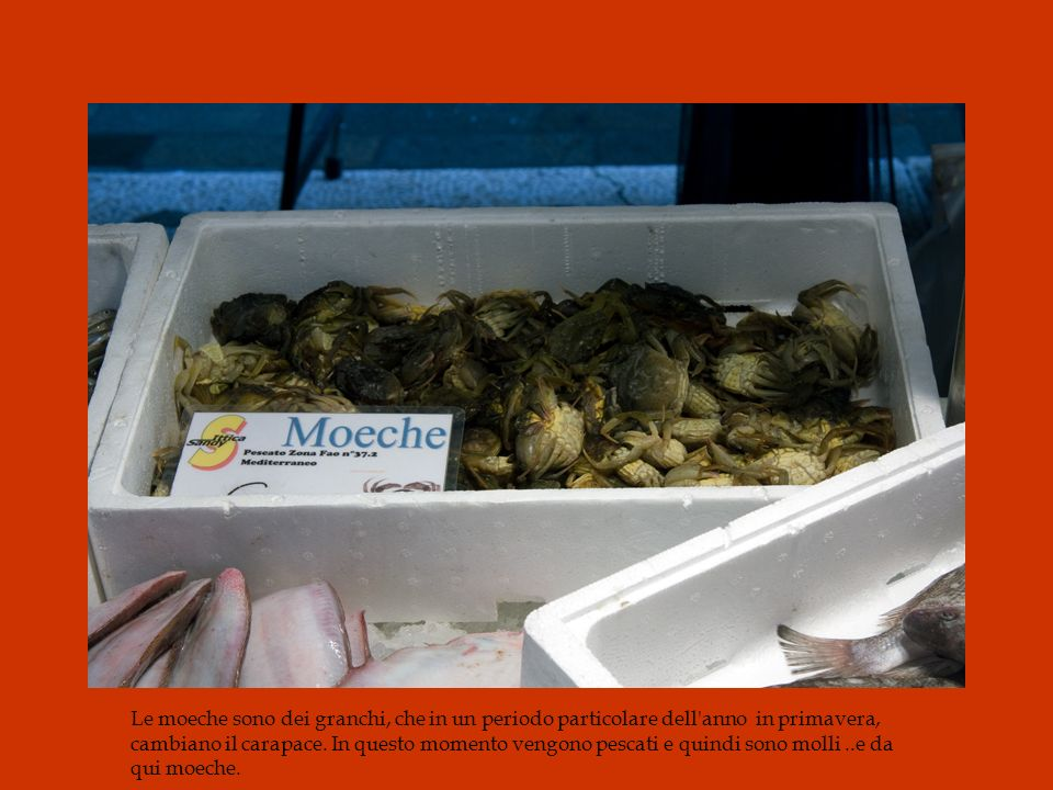 Le Moeche, véritable spécialité gastronomique vénitienne, est un petit crabe qui mue deux fois par an, au printemps et à l'automne. A ce moment, ayant perdu sa carapace, il se trouve tout mou et c'est ainsi qu'il est pané (j'aurai même tendance à dire, simplement frit) et qu'on le déguste entier. C'est absolument délicieux. Par contre ça n'est pas forcément à la carte des restaurants, ou plutôt des trattorias ou nous allions. Il ne faut donc pas hésiter à demander directement au restaurateur s il a ou non des moeche. FROM http://gastronomique.canalblog.com/archives/2007/11/26/7026670.html Le moeche sono dei granchi, che in un periodo particolare dell anno che mi sembra sia in primavera, cambiano il carapace. In questo momento vengono pescati e quindi sono molli ..e da qui moeche.