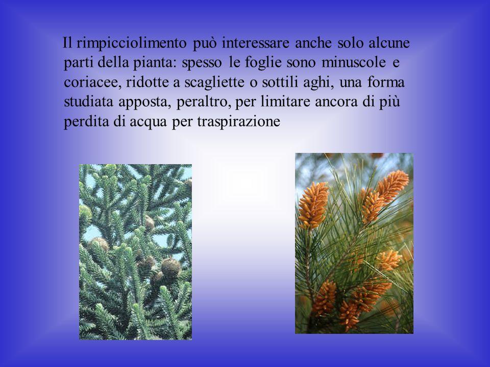 Il rimpicciolimento può interessare anche solo alcune parti della pianta: spesso le foglie sono minuscole e coriacee, ridotte a scagliette o sottili aghi, una forma studiata apposta, peraltro, per limitare ancora di più perdita di acqua per traspirazione
