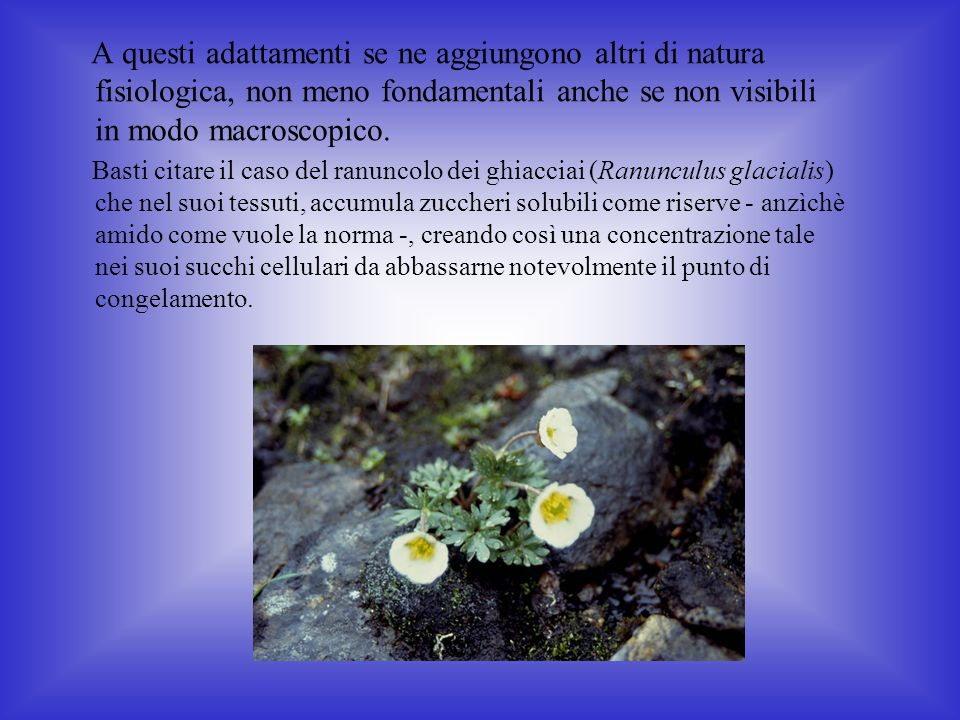 A questi adattamenti se ne aggiungono altri di natura fisiologica, non meno fondamentali anche se non visibili in modo macroscopico.