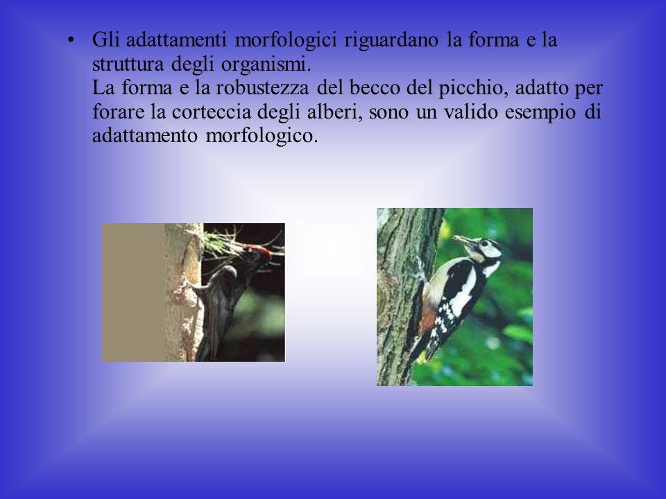 Gli adattamenti morfologici riguardano la forma e la struttura degli organismi.