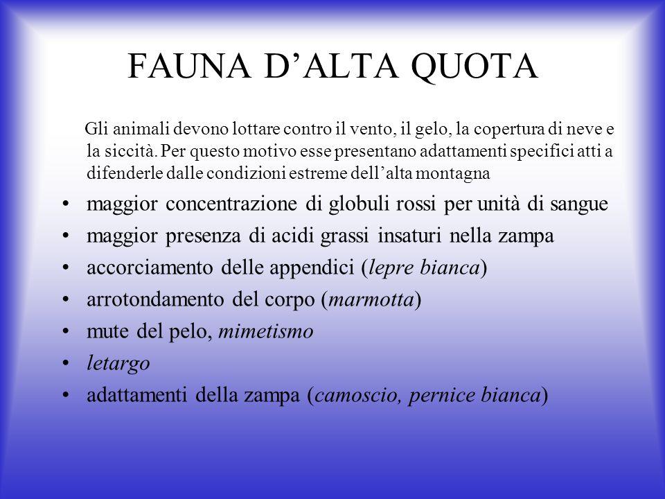 FAUNA D'ALTA QUOTA