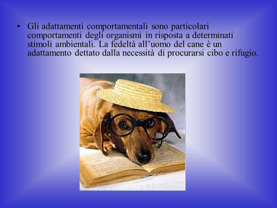 Gli adattamenti comportamentali sono particolari comportamenti degli organismi in risposta a determinati stimoli ambientali.