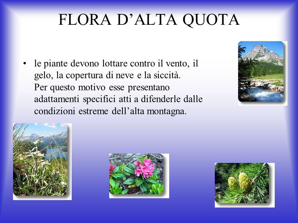 FLORA D'ALTA QUOTA