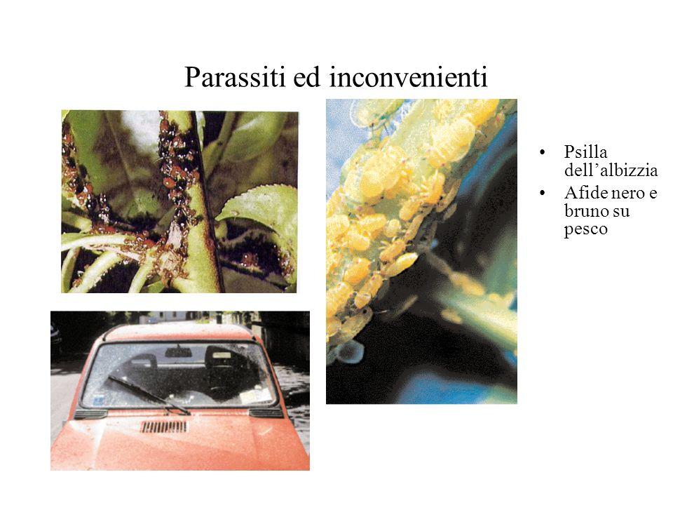 Parassiti ed inconvenienti