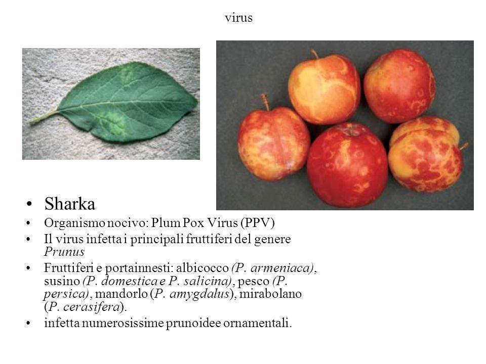 Sharka virus Organismo nocivo: Plum Pox Virus (PPV)