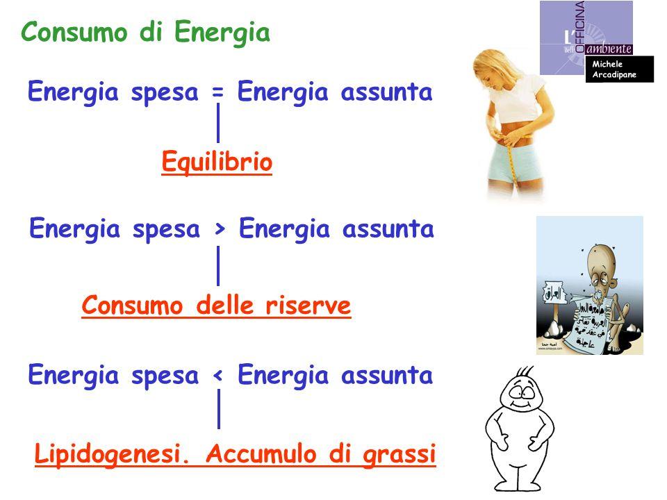 Consumo di Energia Energia spesa = Energia assunta Equilibrio