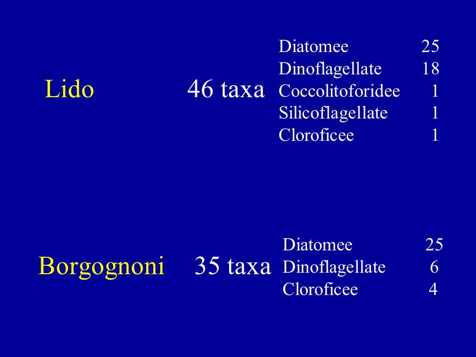 Lido 46 taxa Borgognoni 35 taxa Diatomee 25 Dinoflagellate 18