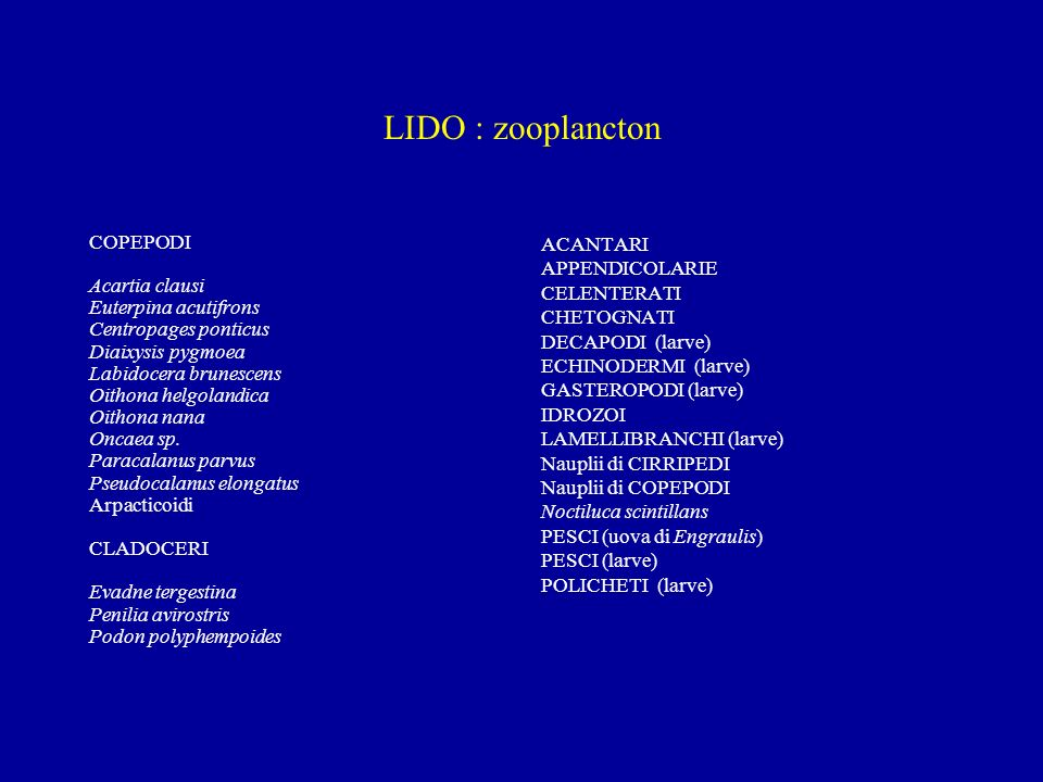 LIDO : zooplancton COPEPODI Acartia clausi Euterpina acutifrons