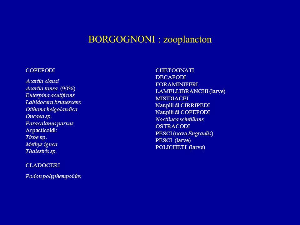 BORGOGNONI : zooplancton