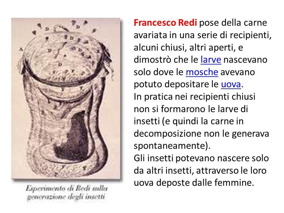 Francesco Redi pose della carne avariata in una serie di recipienti, alcuni chiusi, altri aperti, e dimostrò che le larve nascevano solo dove le mosche avevano potuto depositare le uova.