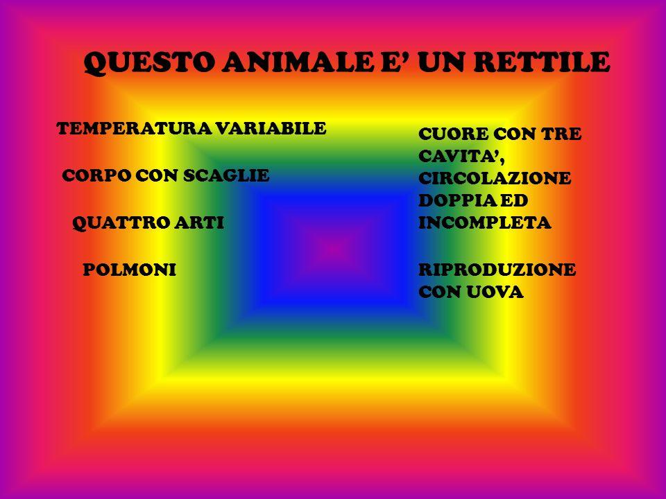 QUESTO ANIMALE E' UN RETTILE