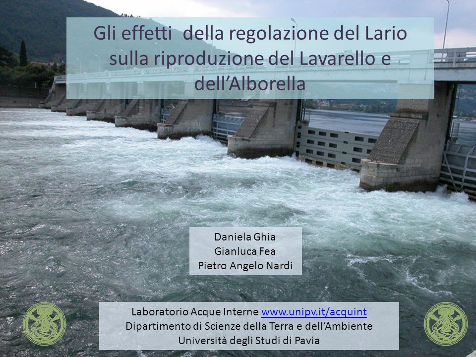 Gli effetti della regolazione del Lario sulla riproduzione del Lavarello e dell'Alborella