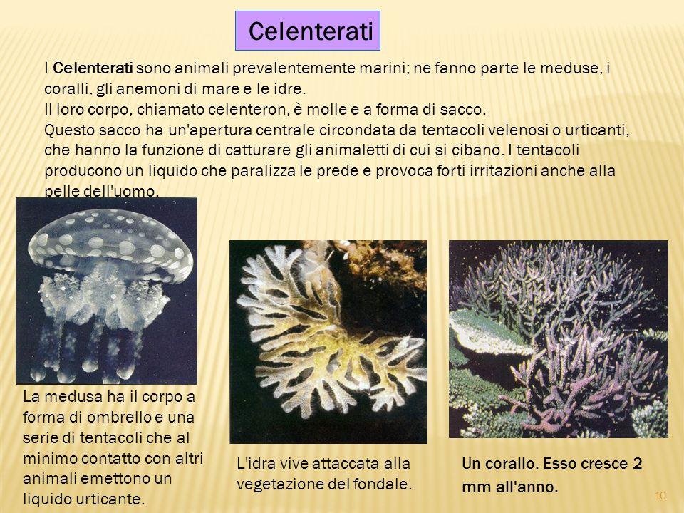 Celenterati