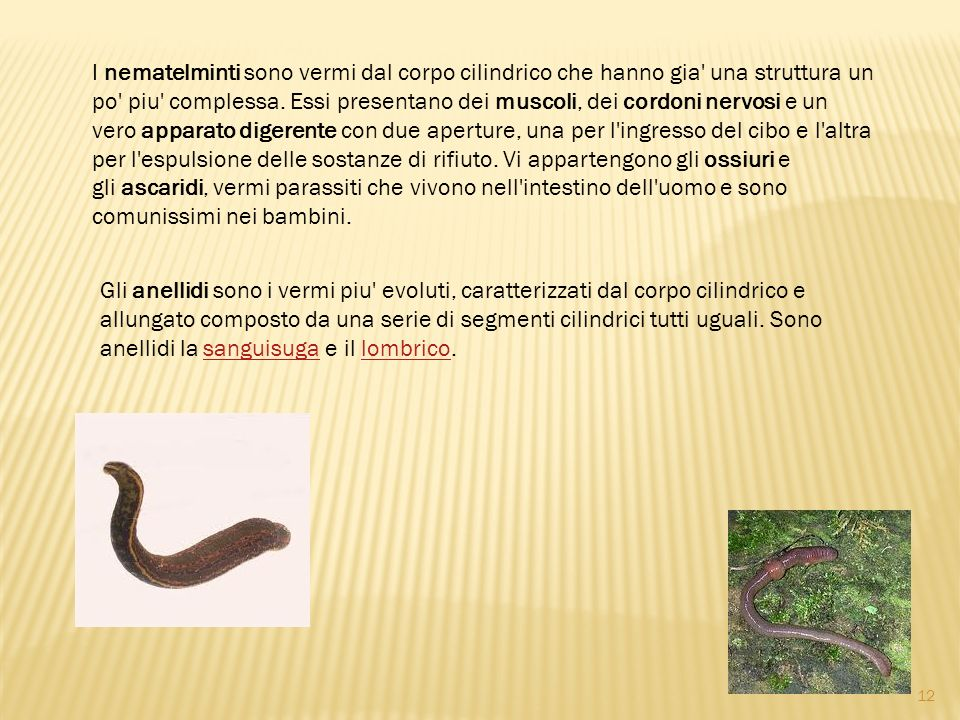 I nematelminti sono vermi dal corpo cilindrico che hanno gia una struttura un po piu complessa. Essi presentano dei muscoli, dei cordoni nervosi e un vero apparato digerente con due aperture, una per l ingresso del cibo e l altra per l espulsione delle sostanze di rifiuto. Vi appartengono gli ossiuri e gli ascaridi, vermi parassiti che vivono nell intestino dell uomo e sono comunissimi nei bambini.